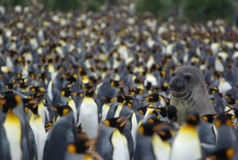 Antarktyka czyli z wizytą w Raju